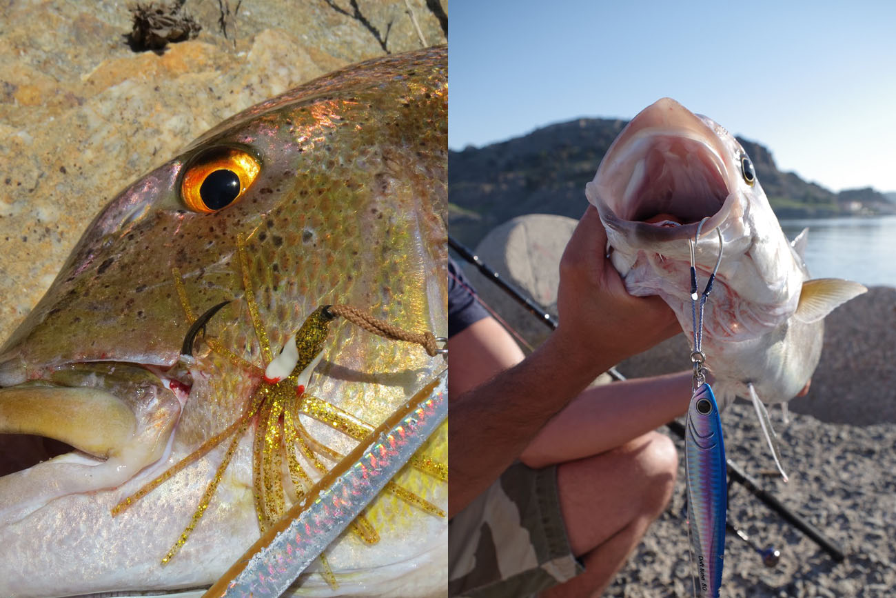 Left: Thick hook on the flesh and a successful catch. Right: Thin hooks on the lower jaw, hooked by the weight of the jig.